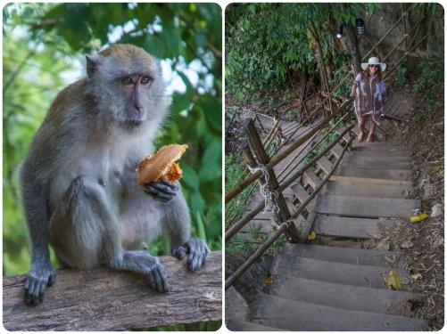 monkeytrail